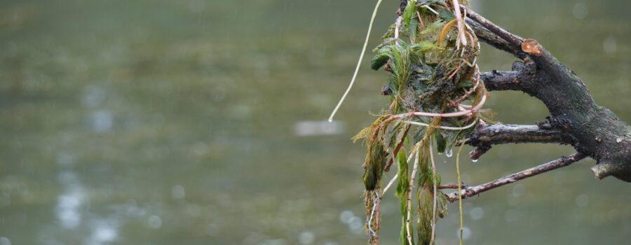 Columbian: Vancouver Lake milfoil treatment working