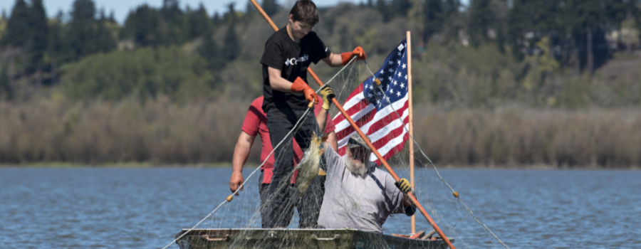 Columbian: Group culls carp to clear Vancouver Lake's water
